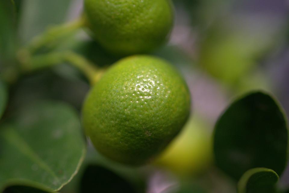 Lemon, Citrus Fruit, Fresh, Fruit, Healthy, Sour, Juice