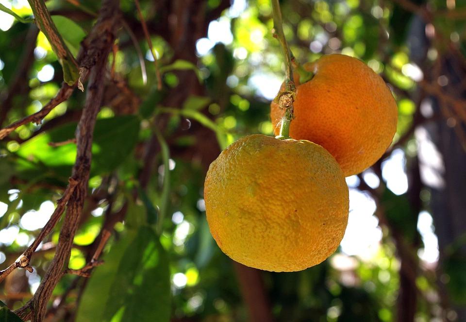Orange, Fruit, Juicy, Citrus Fruits, Bio, Vitamins