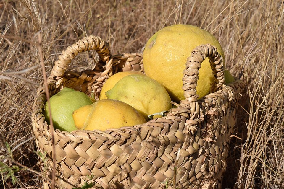 Lemons, Lemon Harvest, Harvest, Citrus Fruits, Yellow