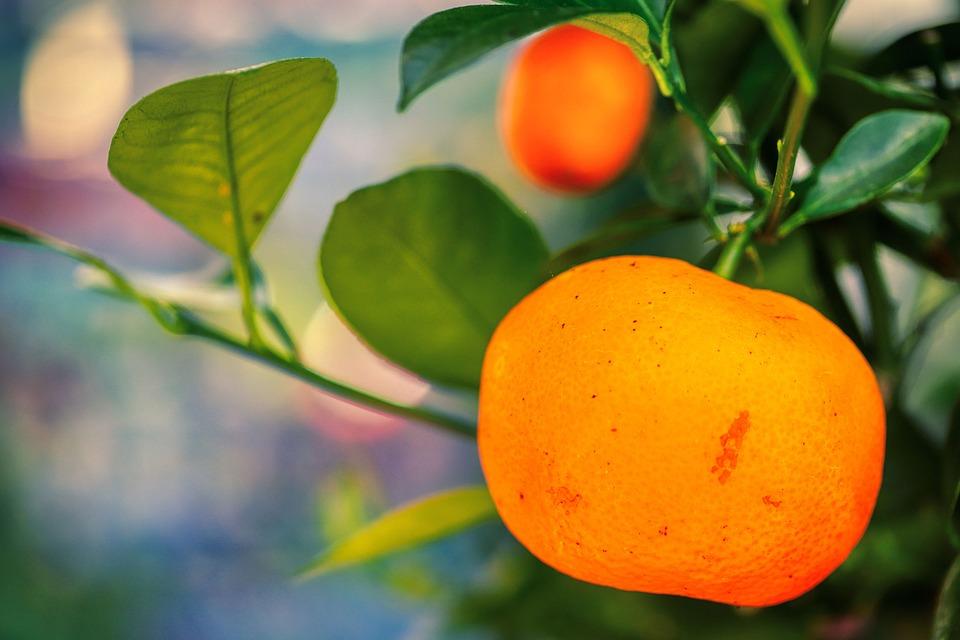 Kumquat, Fruit, Plant, Orange, Food, Citrus