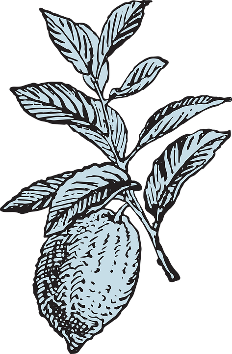 Lemon, Lemon Tree, Fruit, Citrus, Tree, Orchard, Summer