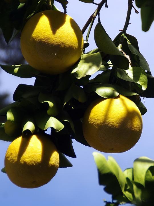 Mexico, Grapefruit, Yellow, Fruit, Citrus