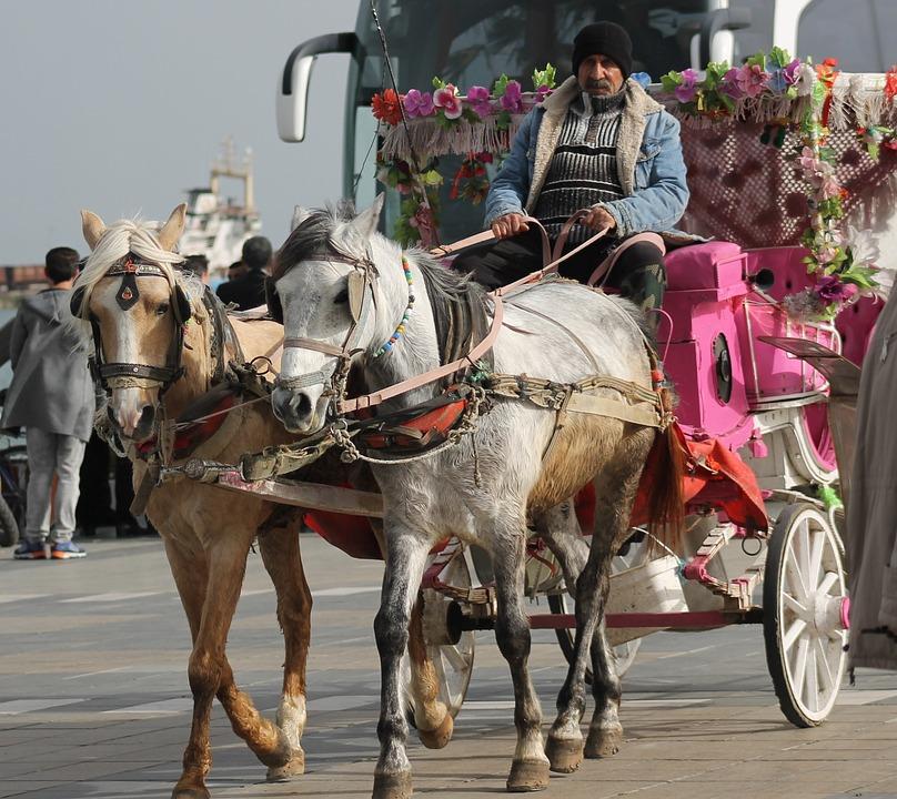 Horse, Animal, City, Turkey