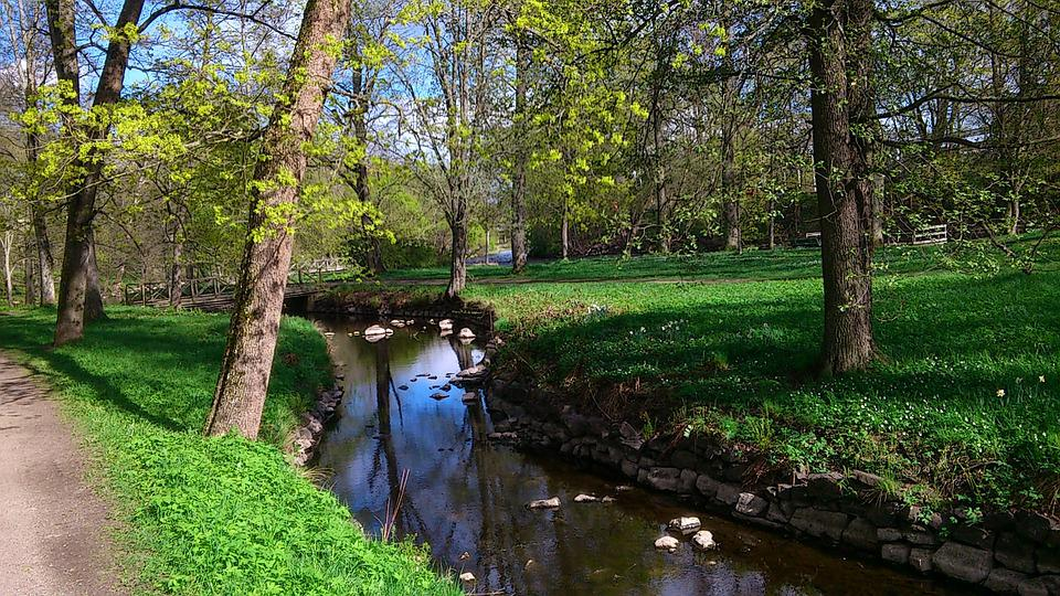 Early Summer, Park, Tree, Nature, City Park, Brook