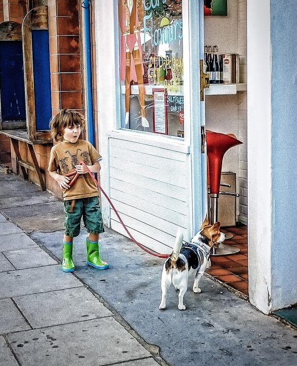 Boy, Dog, Street Market, Look, Joy, City, Market, Shop