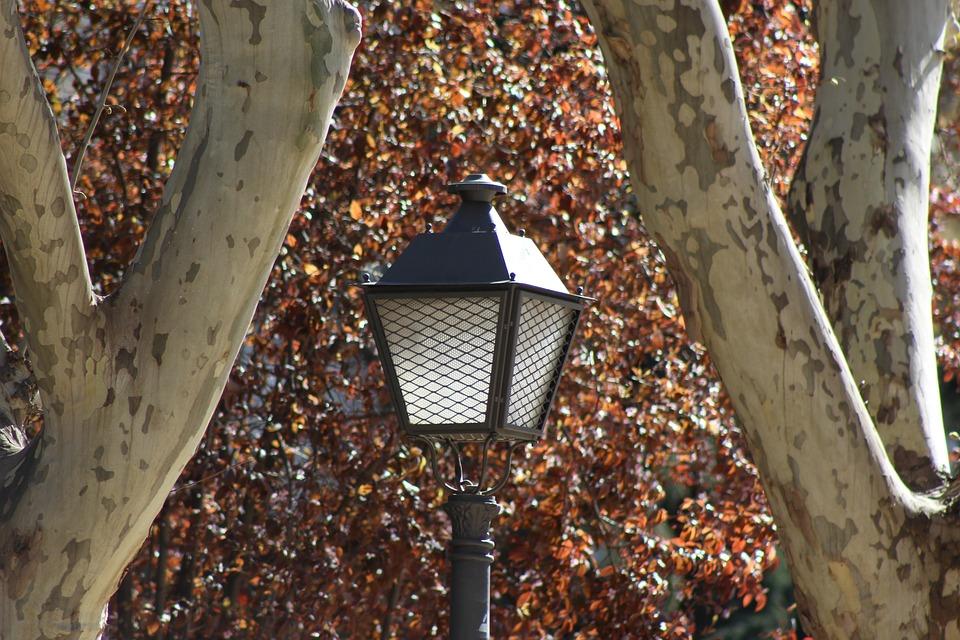 Street Lamp, Park, City, Spring, Trail