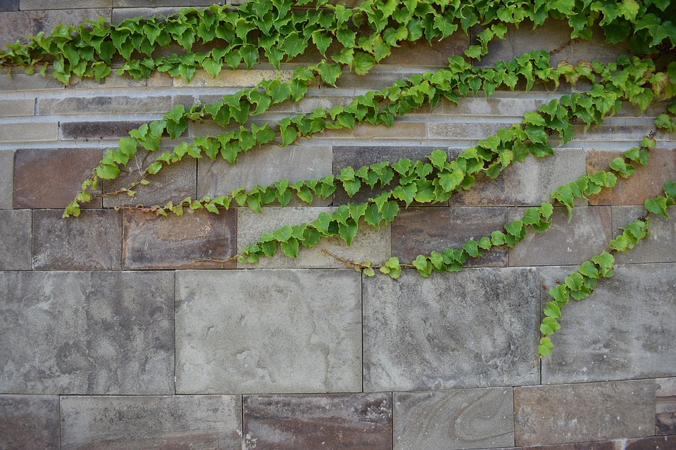 Ivy, City, Nature, Wall, Urban, House, Plants, Park