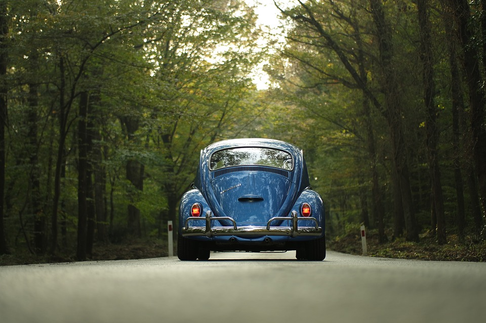 Vw, Beetle, Car, Classic Car, Forest, Outdoors, Road