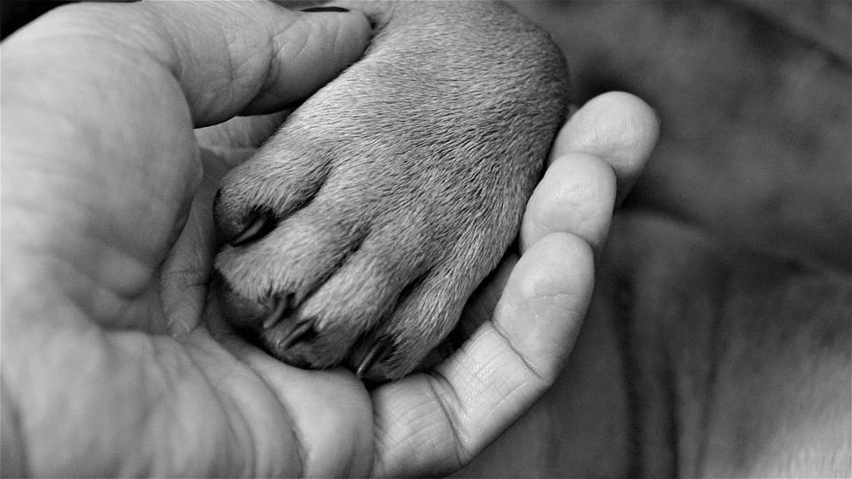 Hand, Woman, Paw, Dog, Finger, Claw, Black White