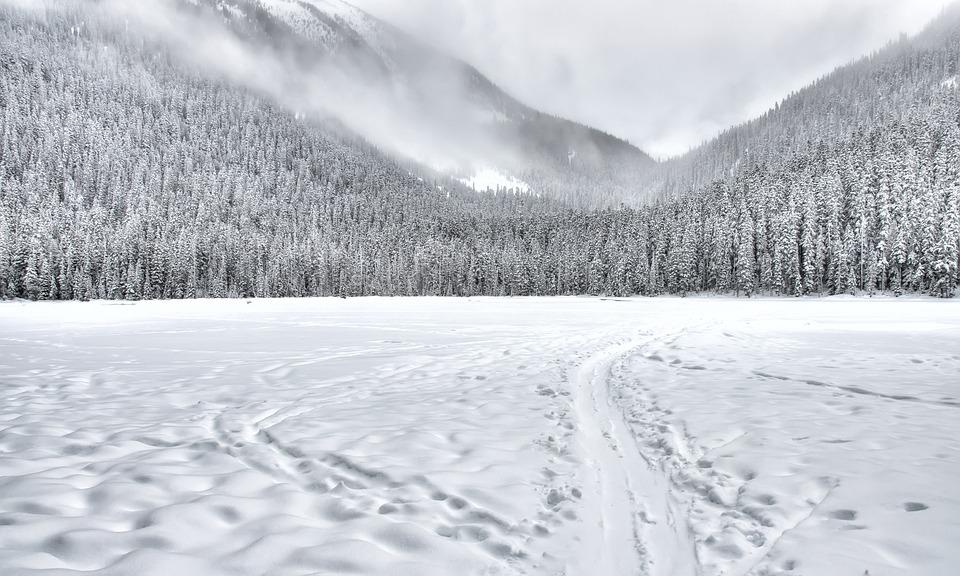 Clean, Clouds, Cloudy, Cold, Forest, Freeze, Frost