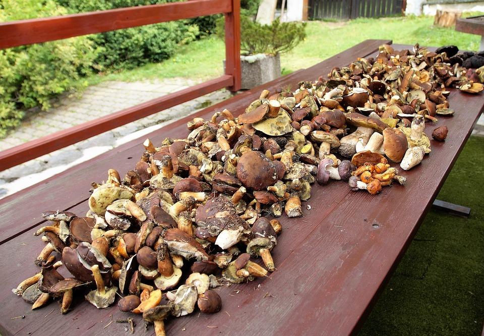Mushrooms, Mushroom Picking, Cleaning Sponges