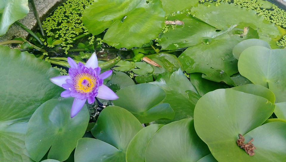 Lotus, Clear The Net, Peace