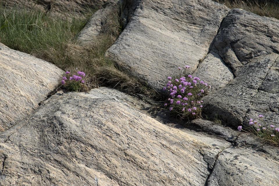 Nature, Plants, Summer, Flower, Cliffs, Granite