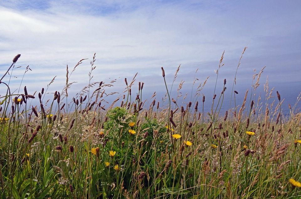 Cliffs Of Moher, Ireland, Travel, Floral, Plants