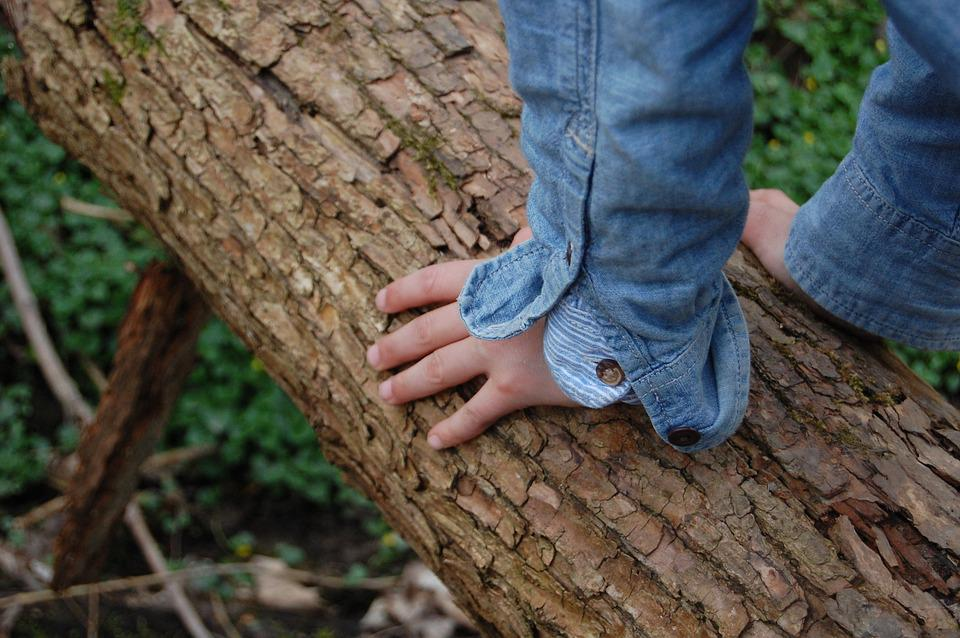 Tree, Child's Hand, Climb