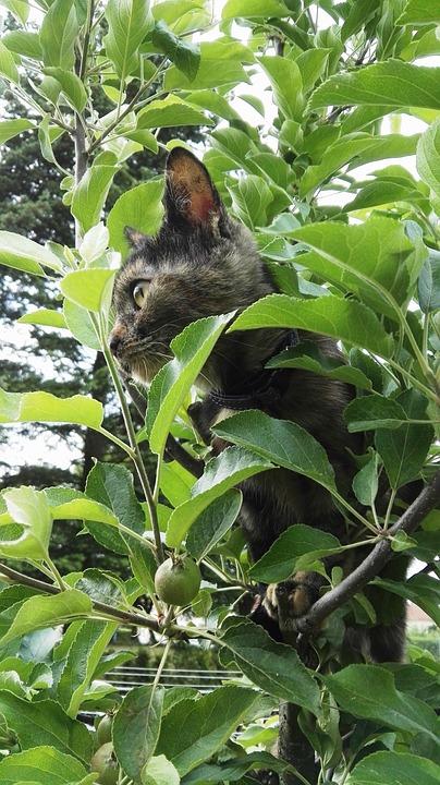 Cat, Tree, Climb, Hide, Pet