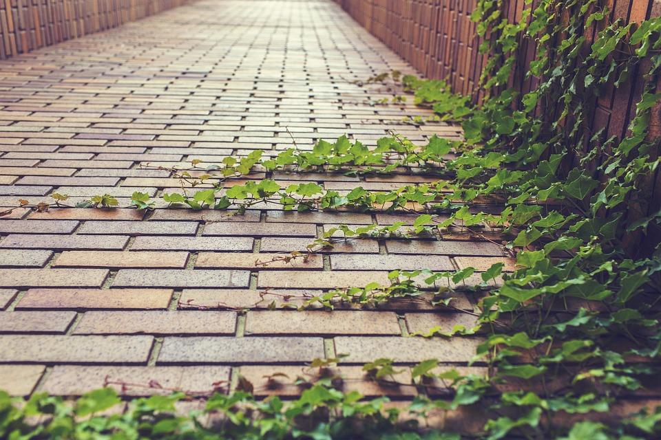 Ivy, Climbing Plant, Creeper, Plant, Leaves, Brickwork