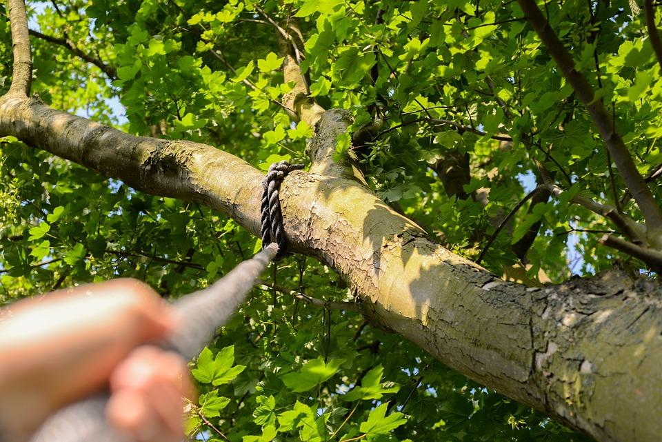 Climbing, Rope, Tree, Hand, Climb, Sport, Activity