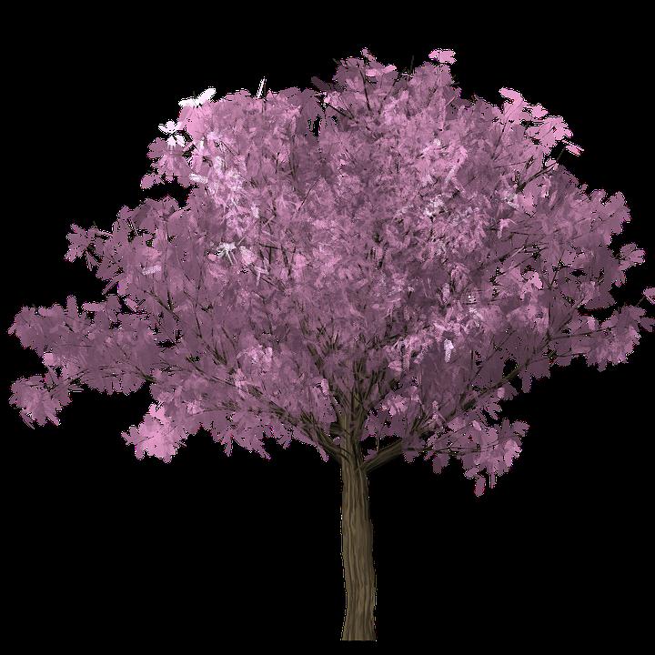 Free photo Clipping Scrap Design Graphics Tree Photoshop