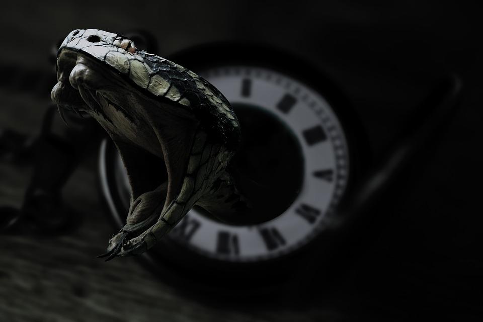 Snake, Clock, Black, Venom, Dark, Eyes, Snakes, Serpent