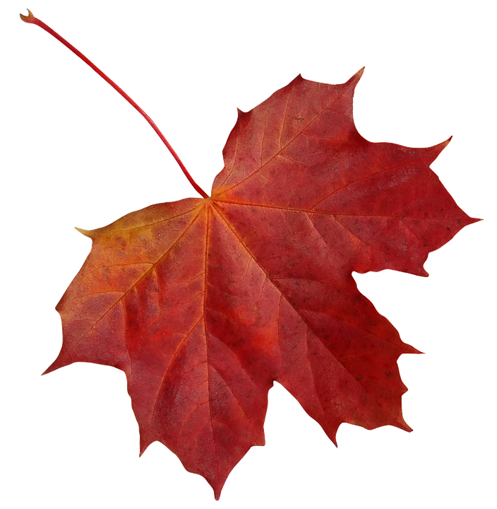 Leaf, Clone, Maple, Autumn, Red, Nature, Colorful