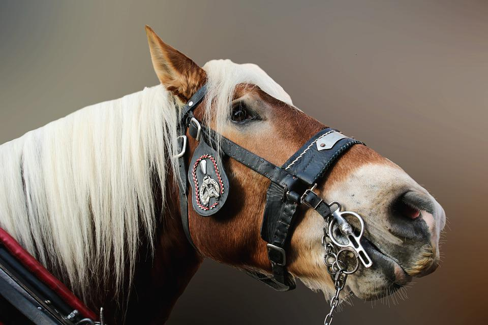 Horse, Close, Horse Head, Animal Portrait, Animal