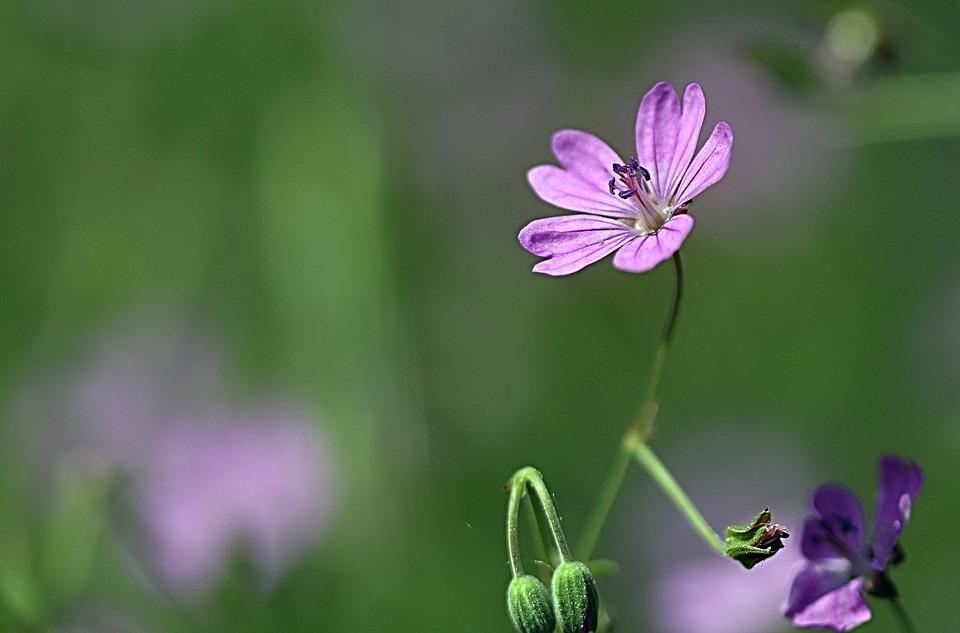 Plant, Flower, Close, Macro, Nature, Blossom, Bloom