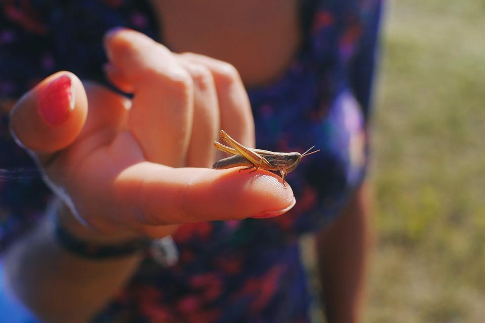 Grasshopper, Closeup, Close, Macro, Nature, Insect