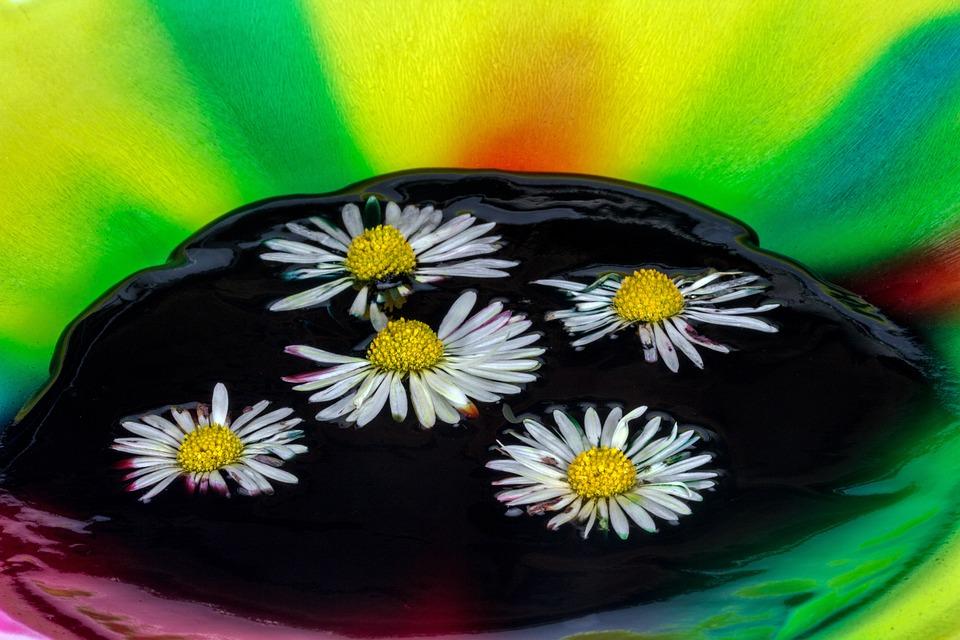 Color, Watercolor, Daisy, Close
