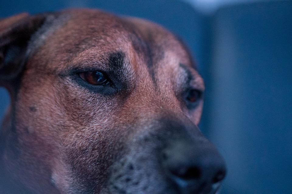 Dog, Close, Eyes, Animal Portrait, Dog Face, Nose, Pet