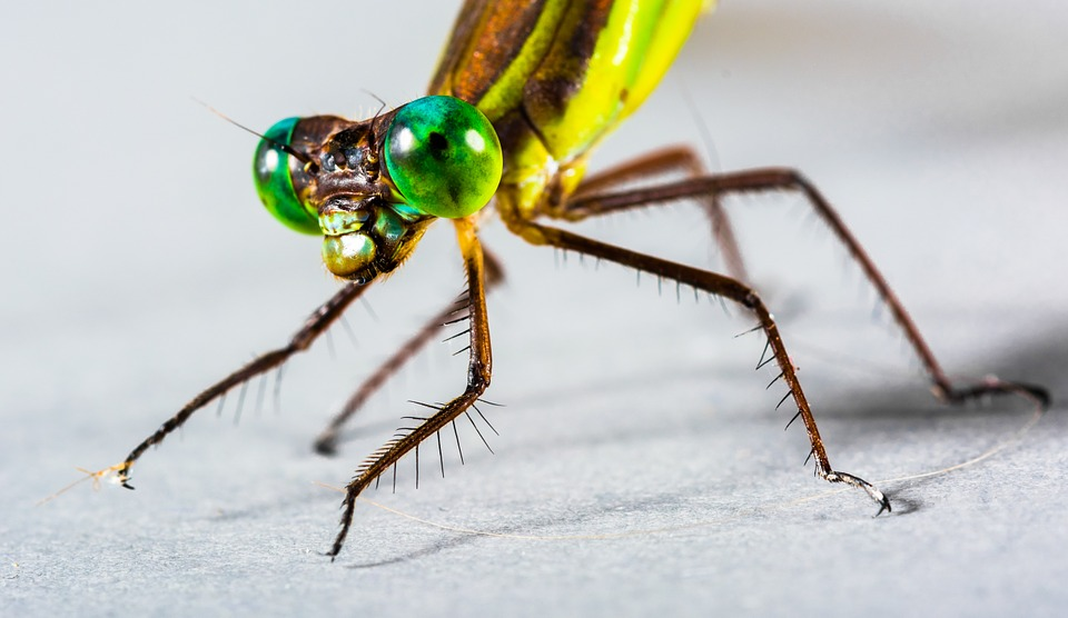 Dragonfly, Insect, Close, Eye