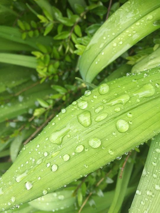 Green, Nature, Leaf, Rain, Drip, Leaves, Plant, Close
