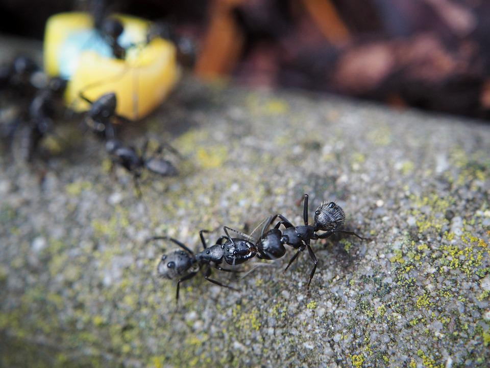 Ant, Ants, Eat, Insect, Nature, Close, Animal