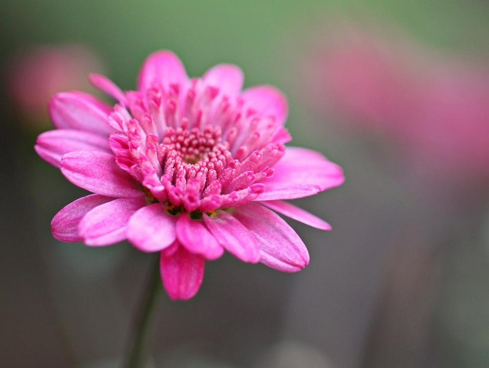 Blossom, Bloom, Flower, Plant, Flora, Nature, Close