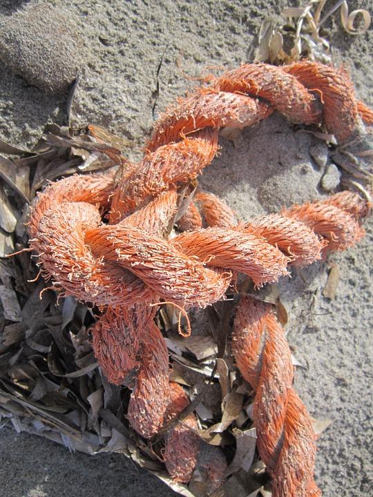 Sand, Beach, Fishing Knots, Rope, Close, Flotsam
