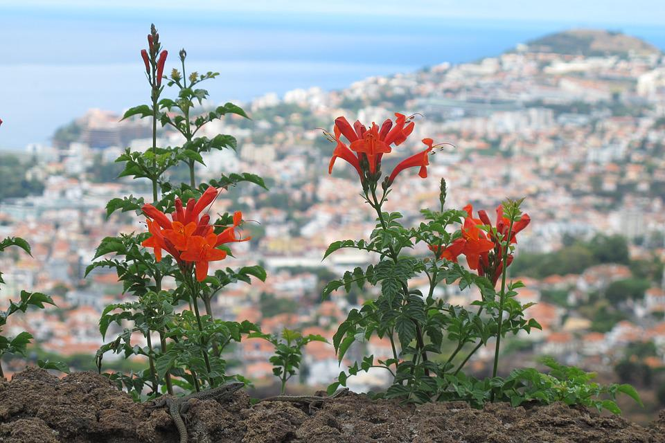 Flower, Close, Madeira
