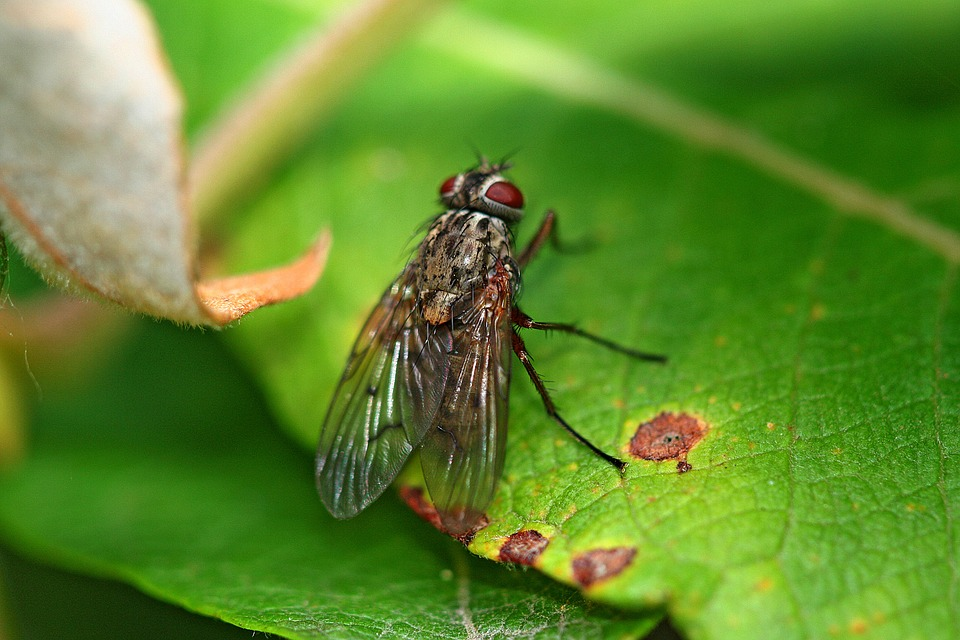 Fly, Leaf, Macro, Green, Insect, Nature, Close, Animal