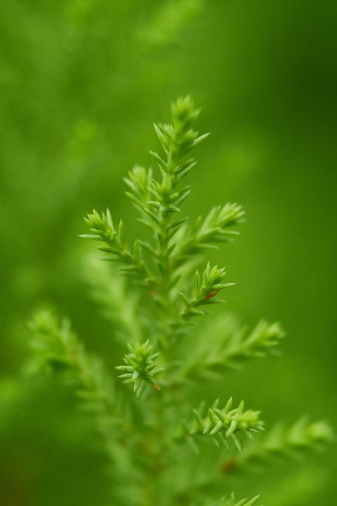 Green, Plant, Leaves, Nature, Forest, Close, Branch