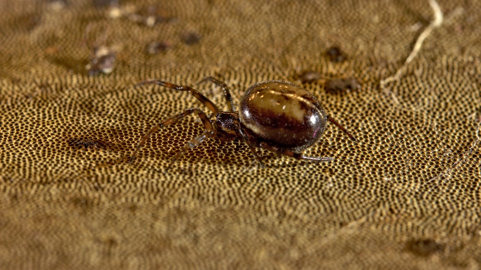 Spider, Gift, Insect, Macro, Close, Baby Spiders