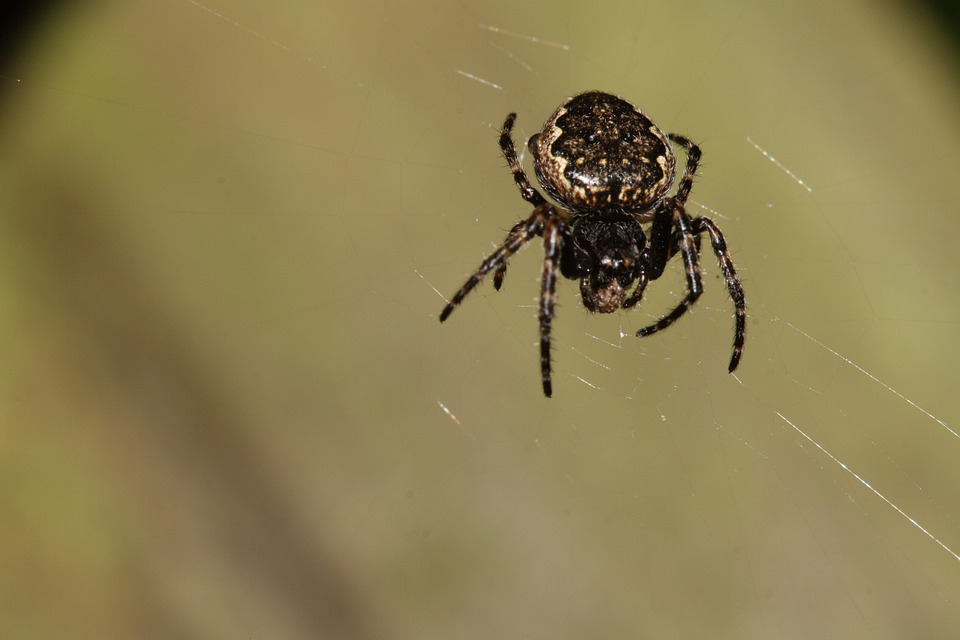 Spider, Network, Nature, Arachnids, Close, Legs, Insect