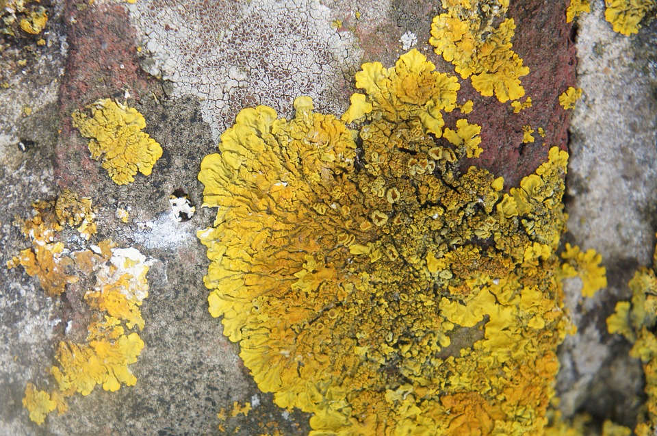 Lichen, Rock, Stone, Yellow, Close, Wall