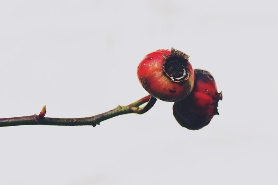 Hawthorn, Plant, Bush, Nature, Autumn, Close, Lonely