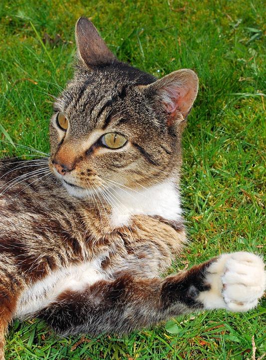 Cat, Male, Sweet, Close, Domestic Cat, Graceful, Cute