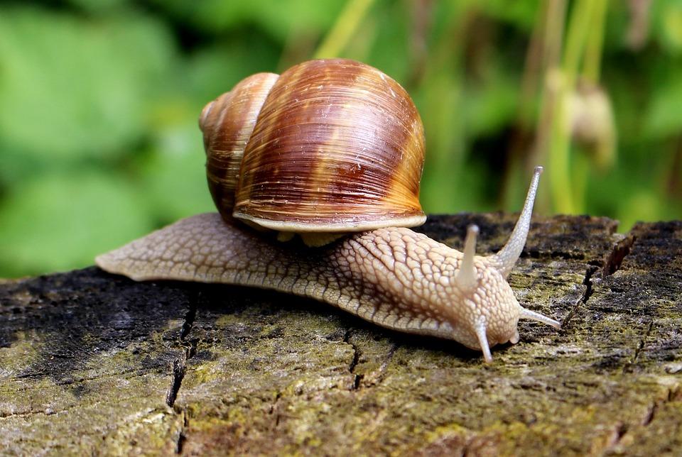 Snail, Shell, Mucus, Close, Slowly, Nature, Crawl