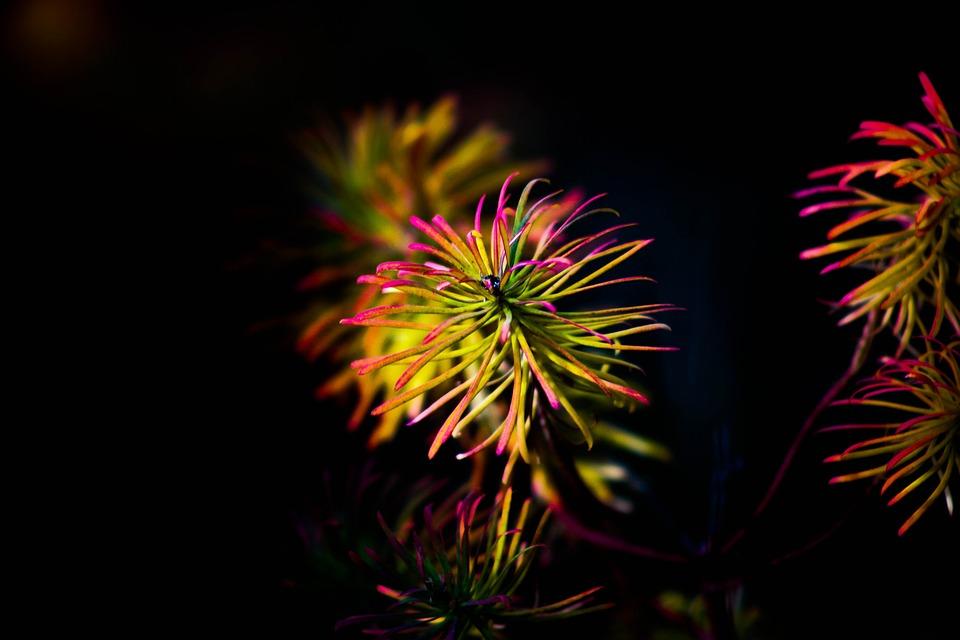 Flower, Black, Nature, Plants, Close, Beauty, Yellow