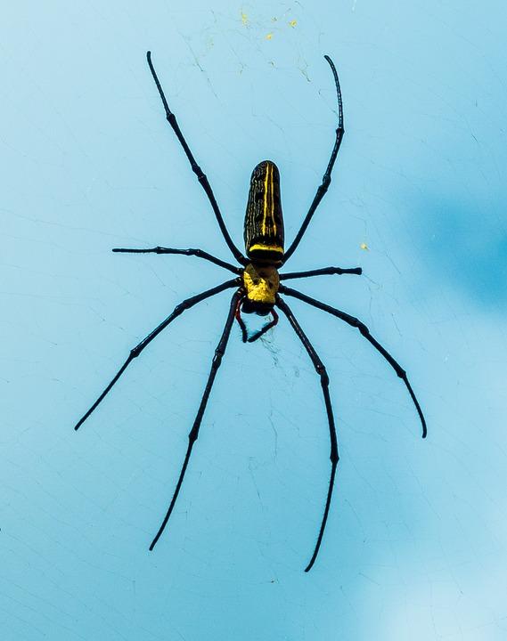 Spider, Network, Close
