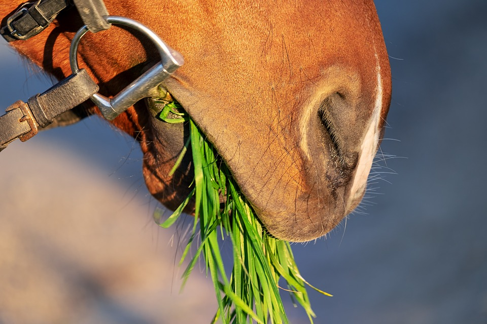 Horse Snout, Nostrils, Close, Animal, Grass, Eat