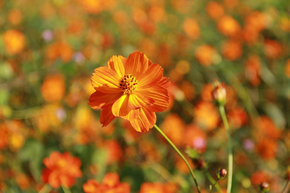 Flowers, Orange, Close, Nature, Bloom, Bright