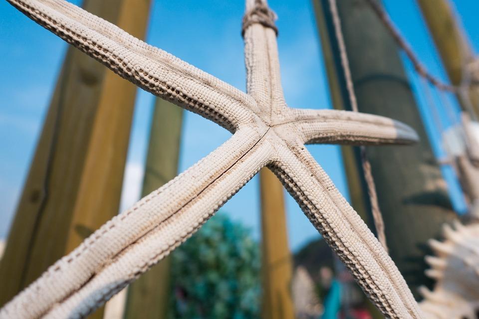 Starfish, Sky, Blue, Park, Garden, Day, Close