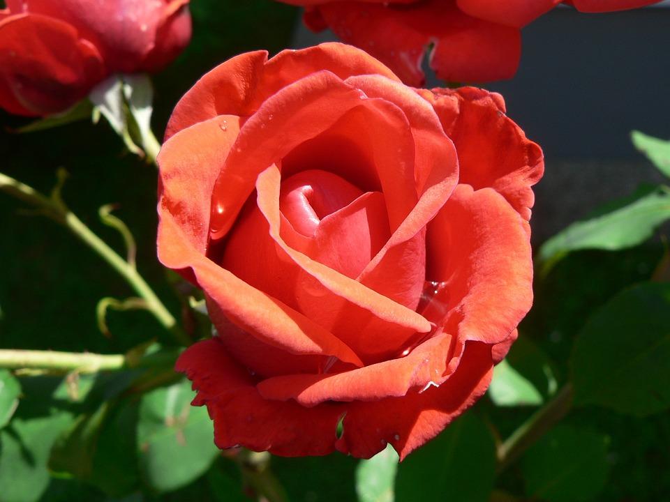 Blossom, Bloom, Flower, Plant, Close, Summer